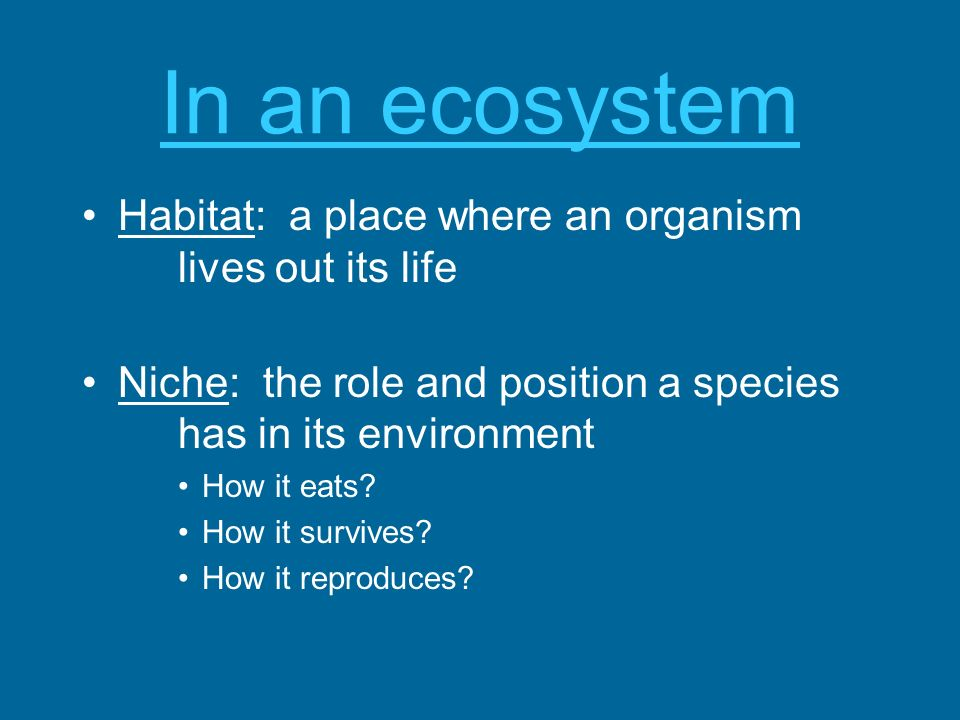 In an ecosystem Habitat: a place where an organism lives out its life Niche: the role and position a species has in its environment How it eats? How i