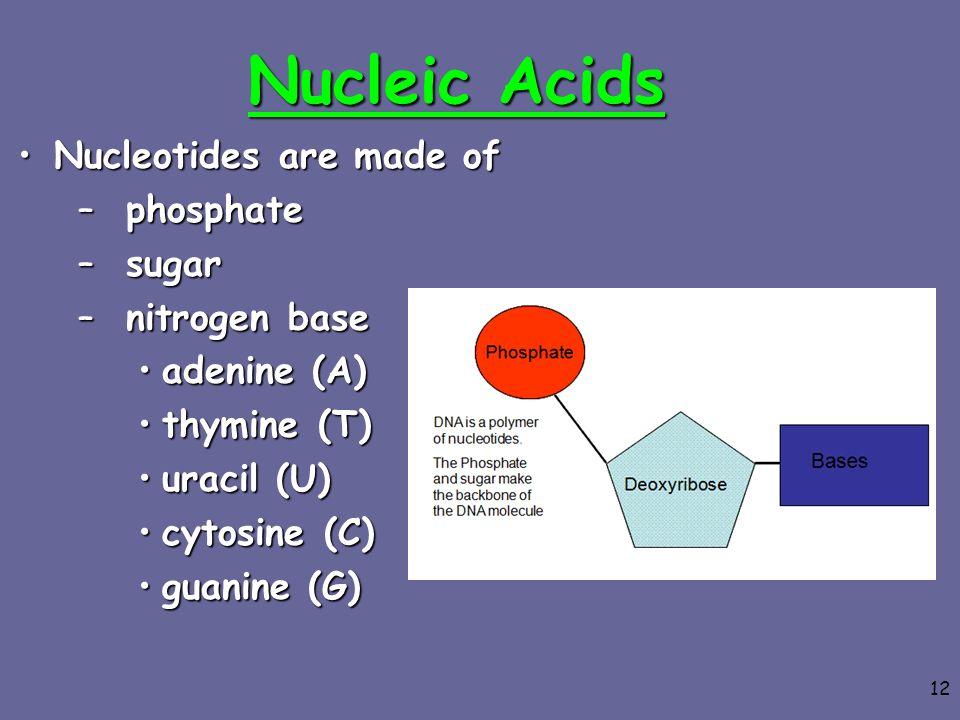 12 Nucleic Acids Nucleotides are made ofNucleotides are made of –phosphate –sugar –nitrogen base adenine (A)adenine (A) thymine (T)thymine (T) uracil
