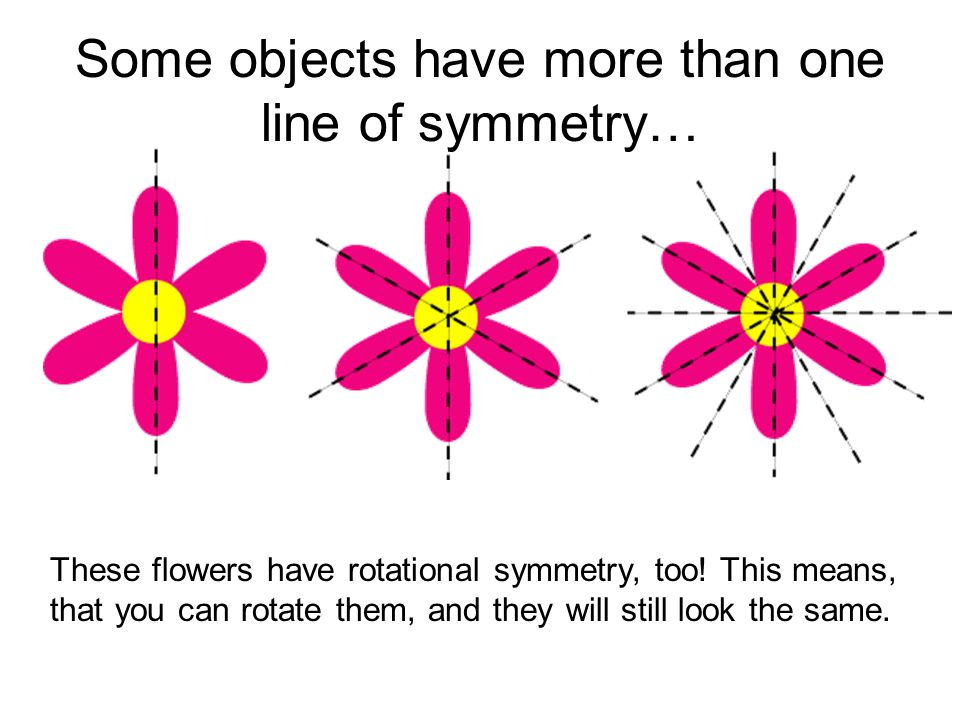 Some objects have more than one line of symmetry… These flowers have rotational symmetry, too! This means, that you can rotate them, and they will sti