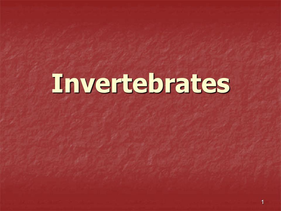 1 Invertebrates