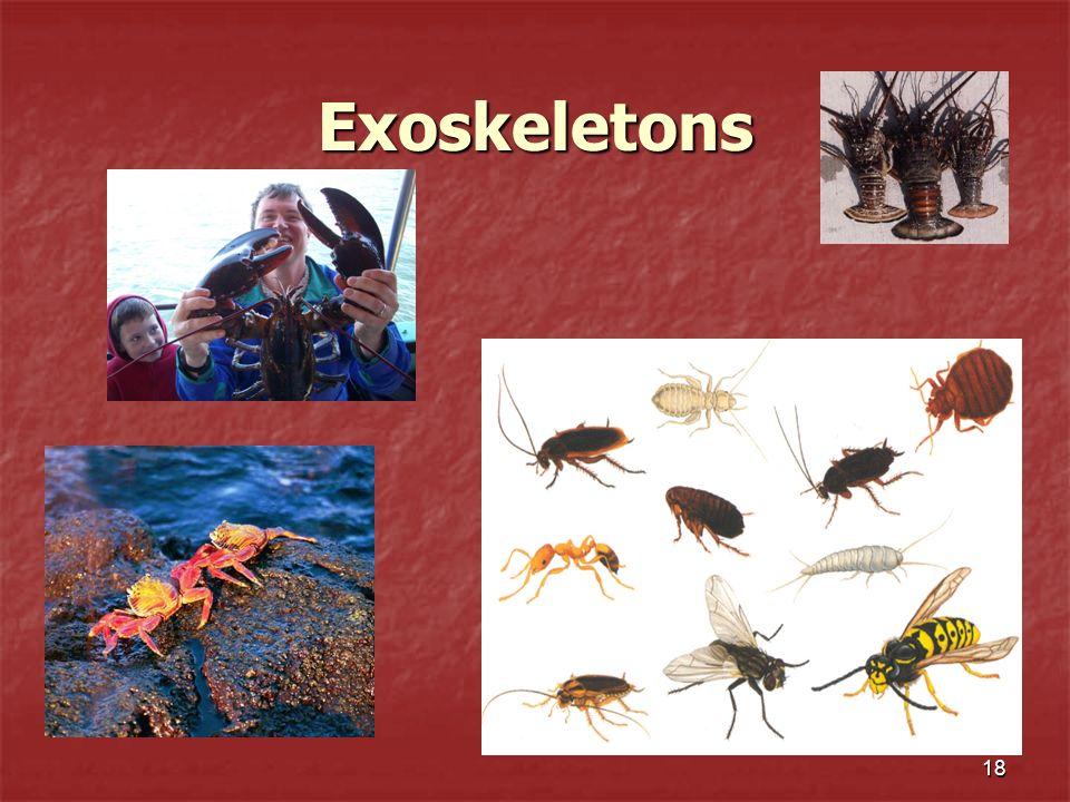 18 Exoskeletons