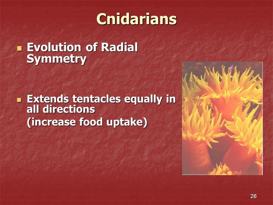 26Cnidarians Evolution of Radial Symmetry Evolution of Radial Symmetry Extends tentacles equally in all directions Extends tentacles equally in all di
