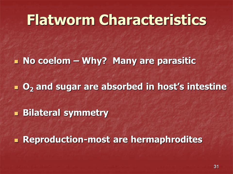 31 Flatworm Characteristics No coelom – Why? Many are parasitic No coelom – Why? Many are parasitic O 2 and sugar are absorbed in hosts intestine O 2