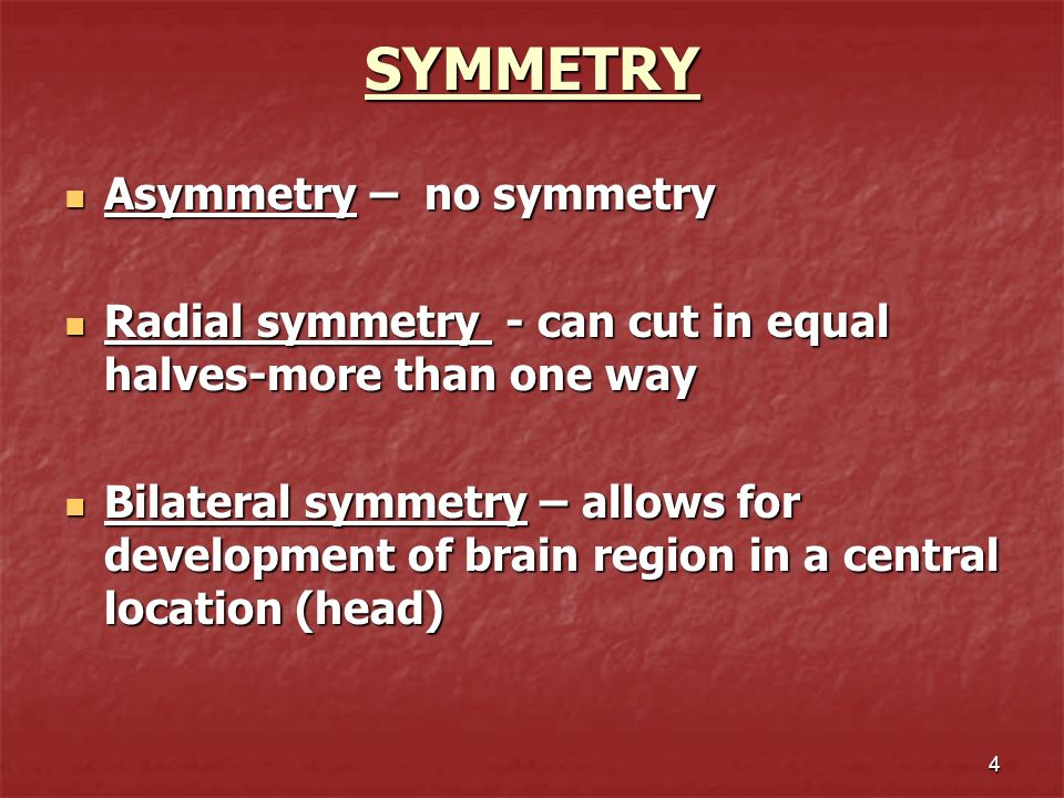 4 SYMMETRY SYMMETRY Asymmetry – no symmetry Asymmetry – no symmetry Radial symmetry - can cut in equal halves-more than one way Radial symmetry - can