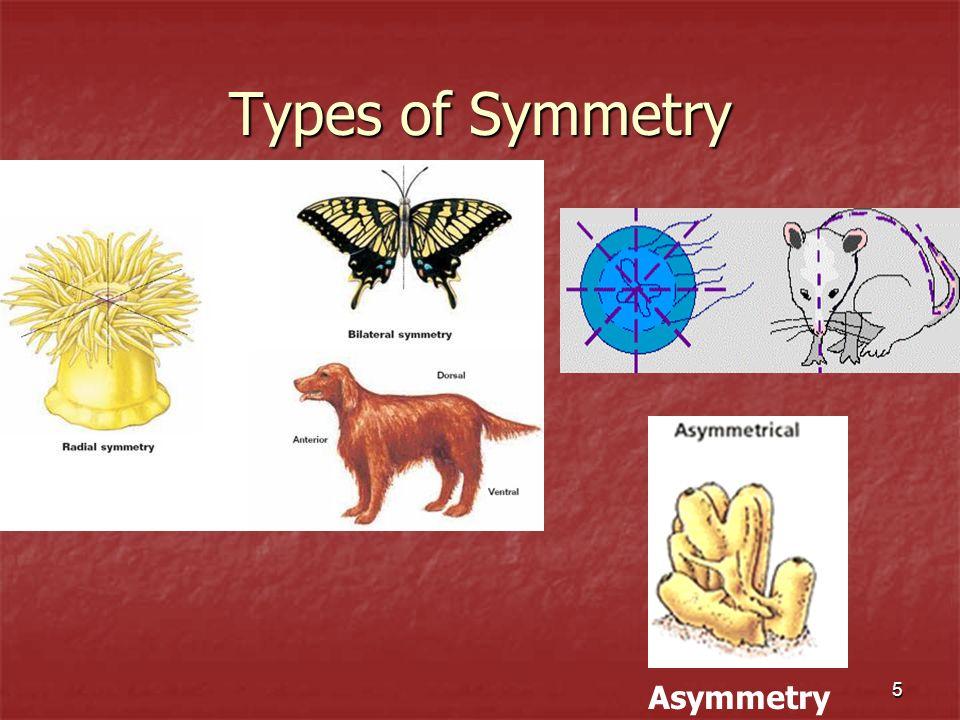 5 Types of Symmetry Asymmetry