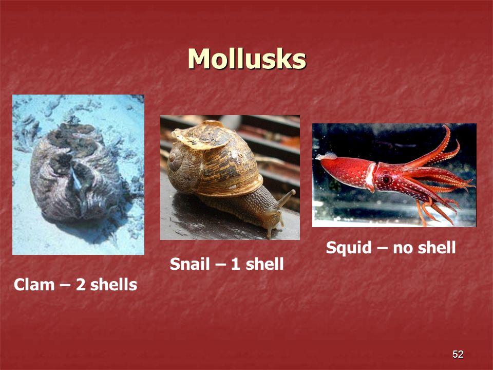 52 Mollusks Clam – 2 shells Snail – 1 shell Squid – no shell
