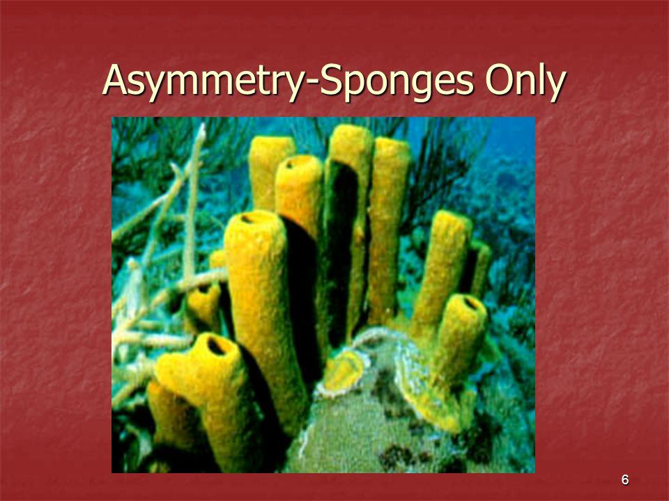 6 Asymmetry-Sponges Only
