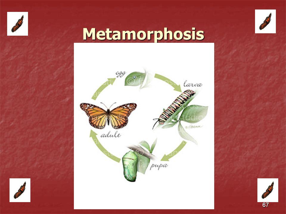 67 Metamorphosis