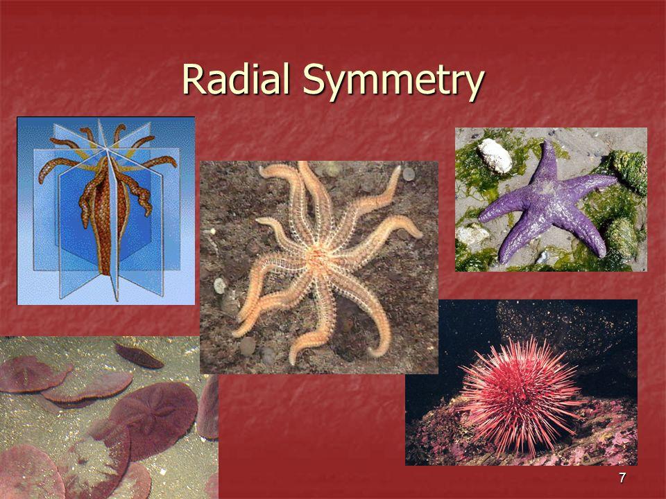 7 Radial Symmetry