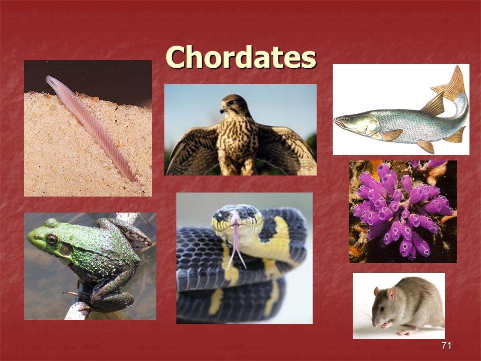 Chordates 71