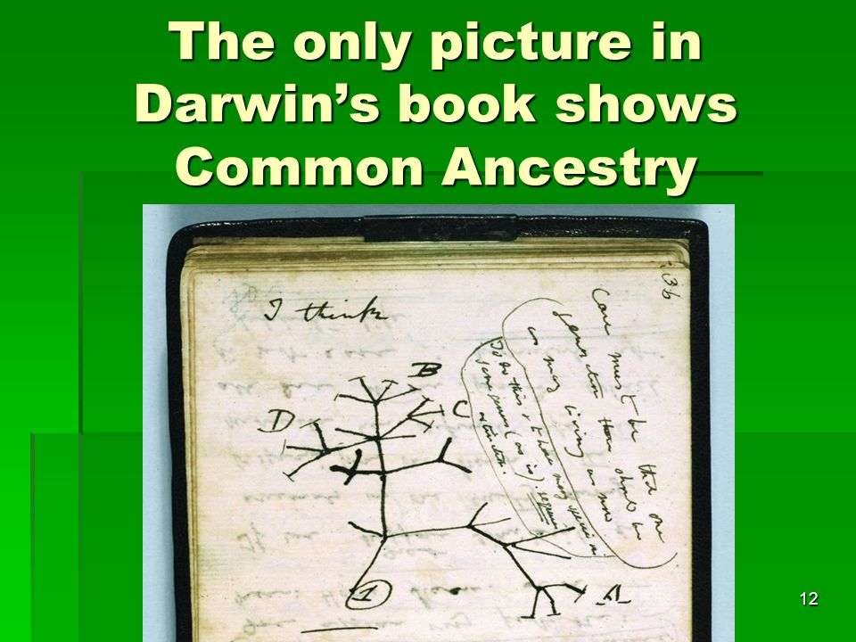 The only picture in Darwins book shows Common Ancestry 12