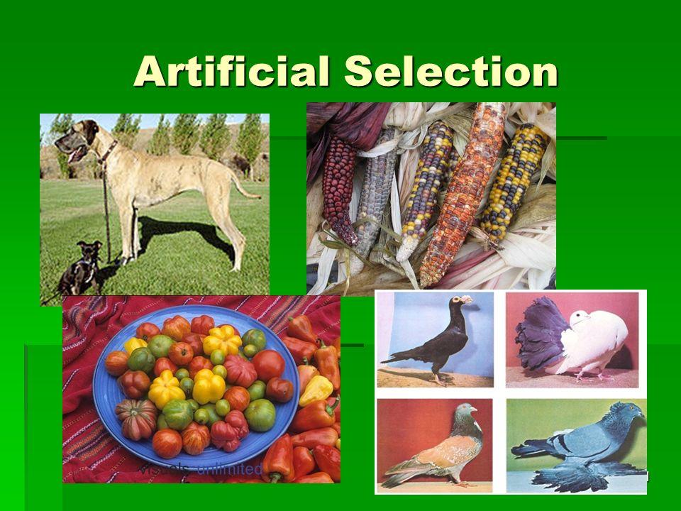 Artificial Selection 21