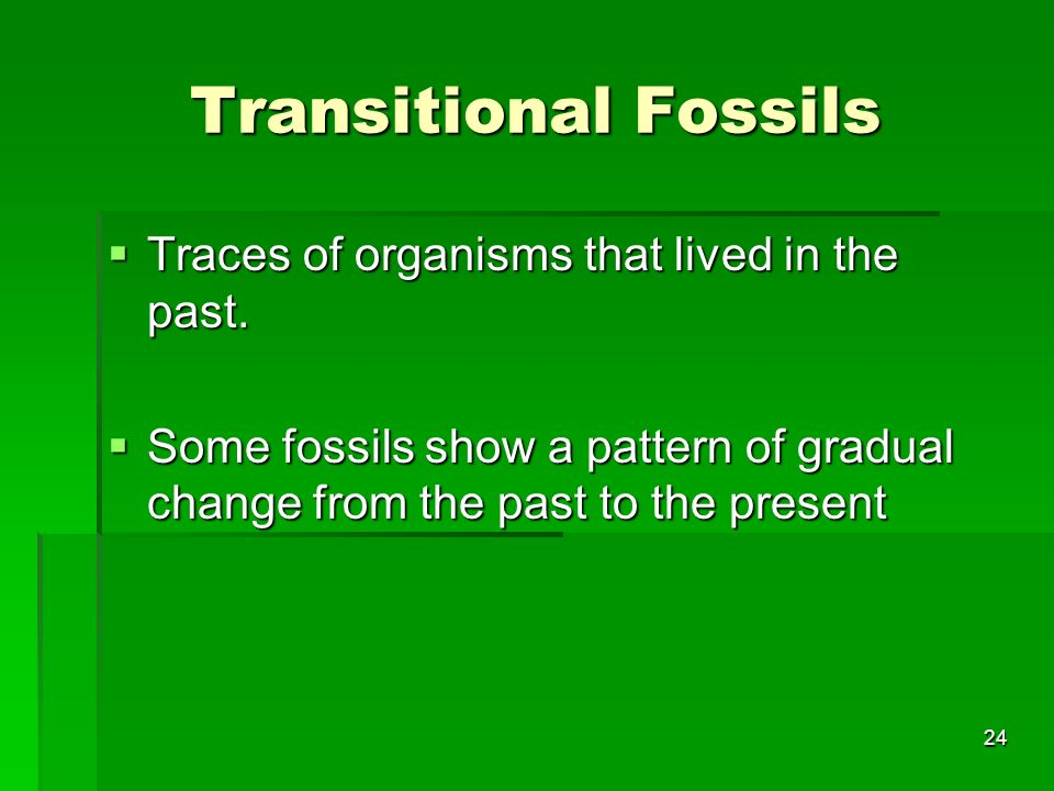 Transitional Fossils Traces of organisms that lived in the past. Traces of organisms that lived in the past. Some fossils show a pattern of gradual ch