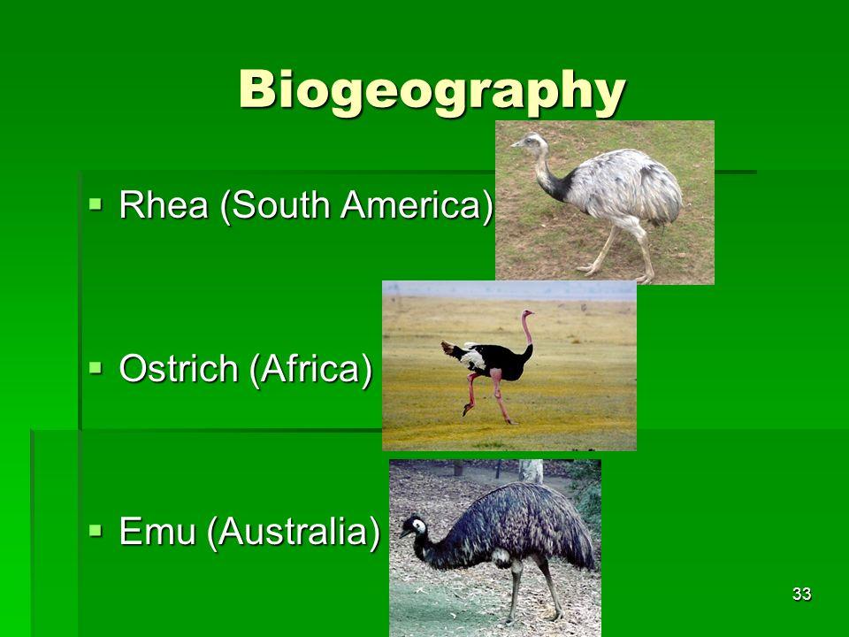 Biogeography Rhea (South America) Rhea (South America) Ostrich (Africa) Ostrich (Africa) Emu (Australia) Emu (Australia) 33