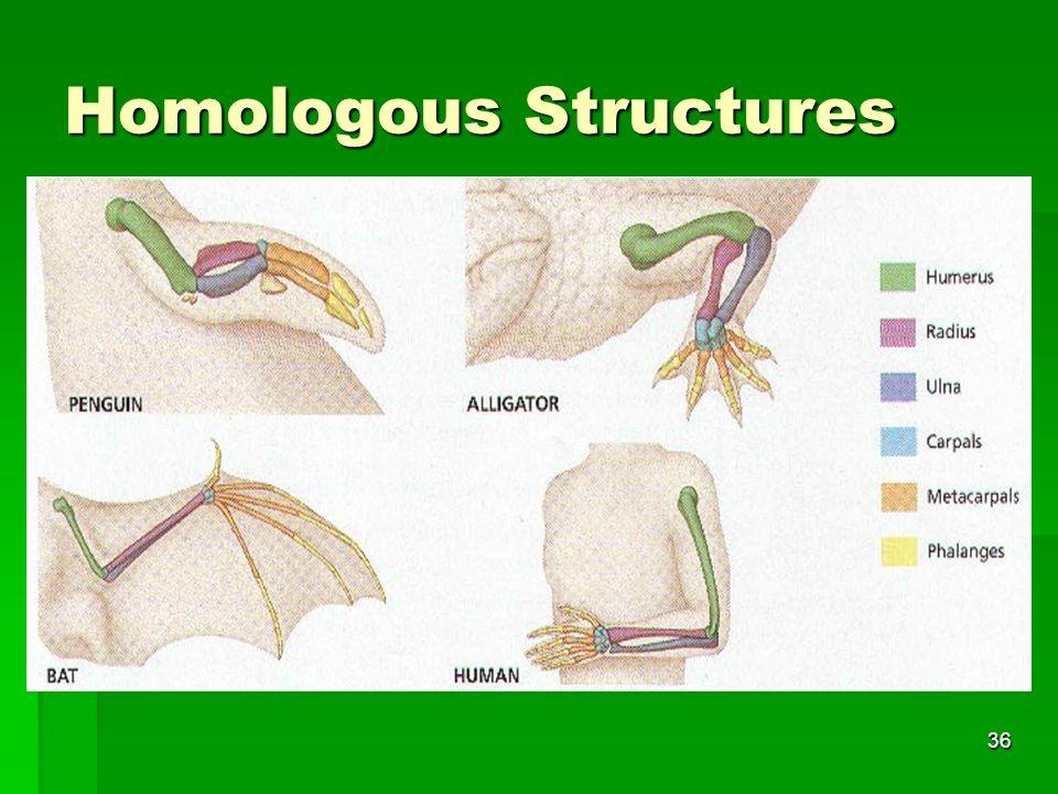 Homologous Structures 36