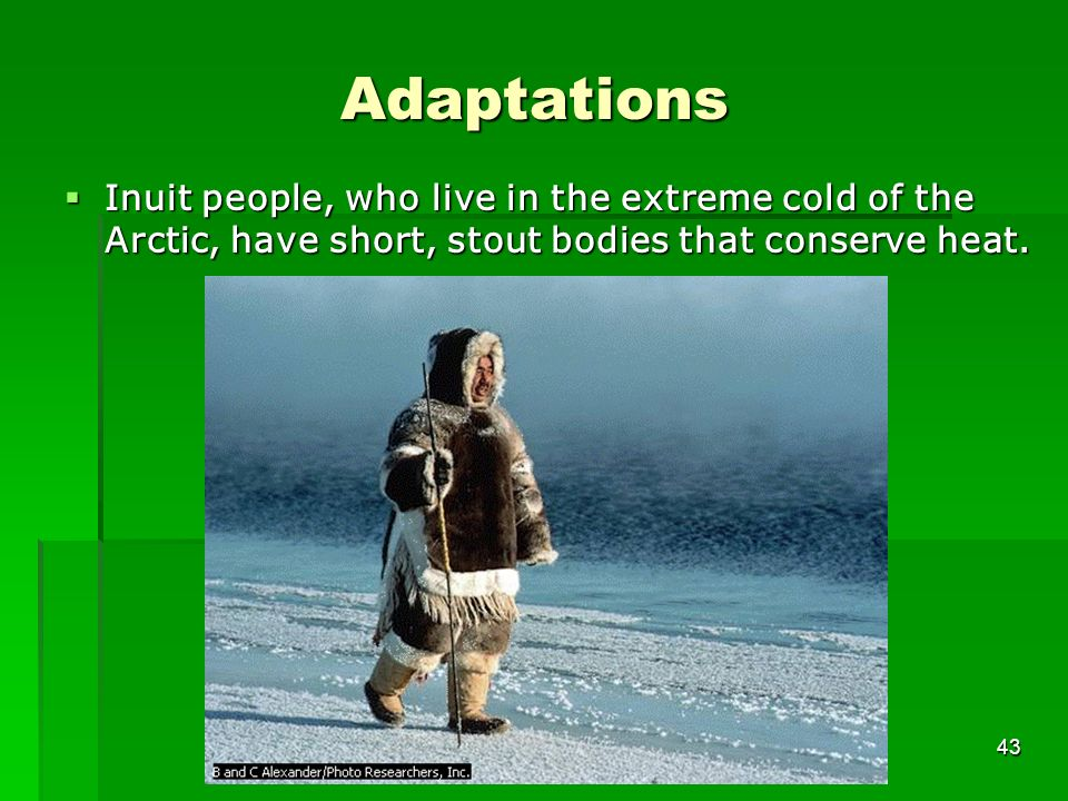 Adaptations Inuit people, who live in the extreme cold of the Arctic, have short, stout bodies that conserve heat. 43