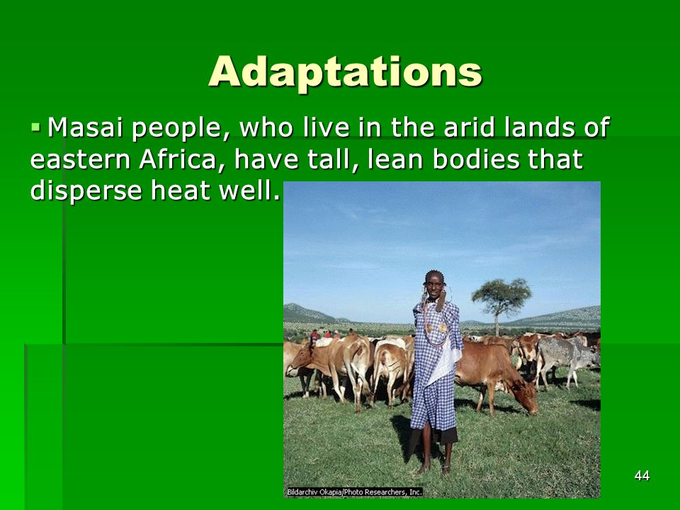 Adaptations 44 Masai people, who live in the arid lands of eastern Africa, have tall, lean bodies that disperse heat well. Masai people, who live in t