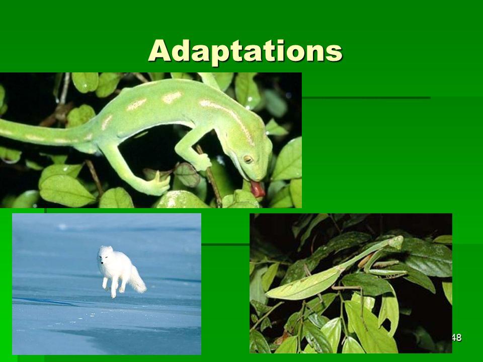Adaptations 48