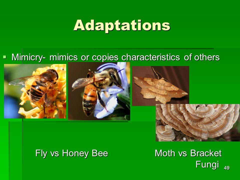 Adaptations Mimicry- mimics or copies characteristics of others Mimicry- mimics or copies characteristics of others Fly vs Honey Bee Moth vs Bracket F