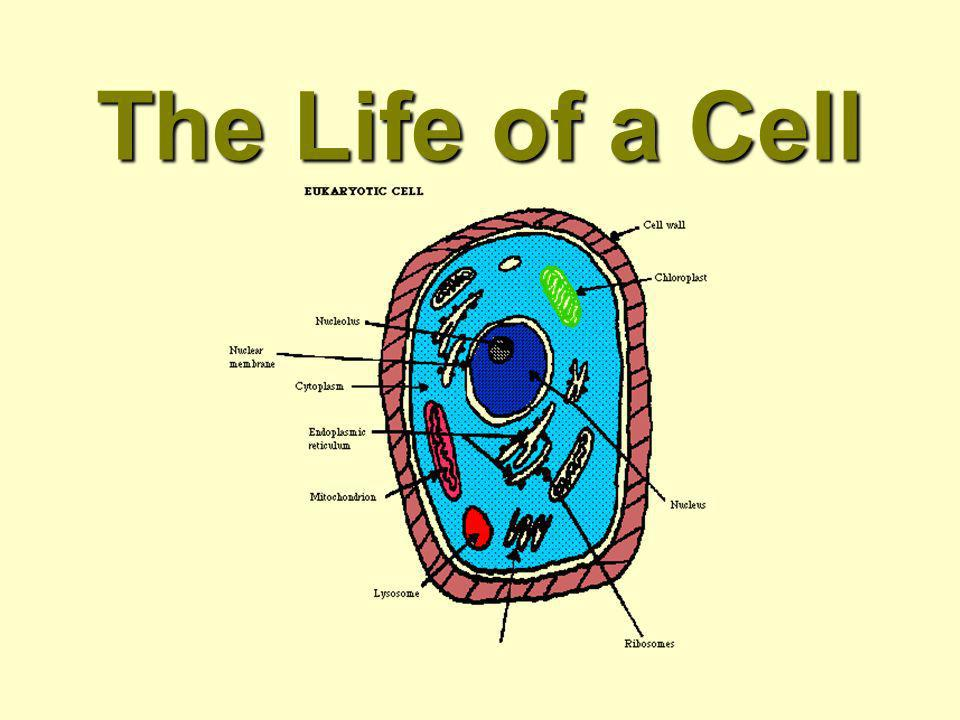 The Life of a Cell