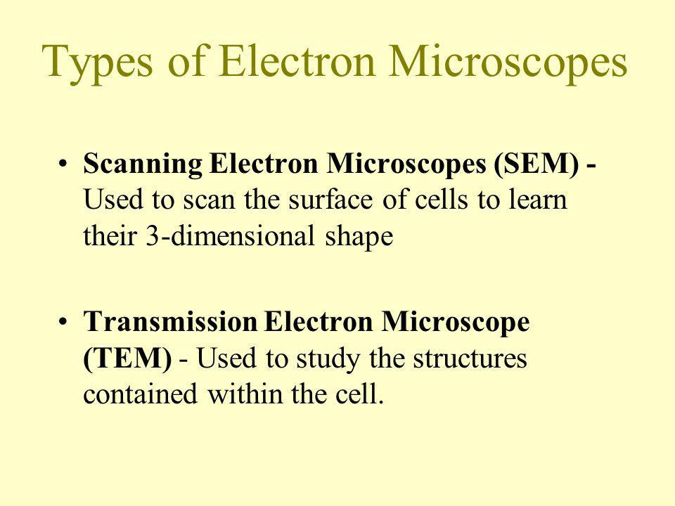 Types of Electron Microscopes Scanning Electron Microscopes (SEM) - Used to scan the surface of cells to learn their 3-dimensional shape Transmission