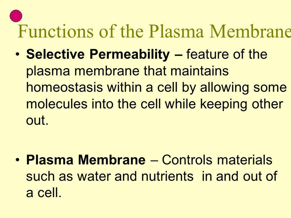 Functions of the Plasma Membrane Selective Permeability – feature of the plasma membrane that maintains homeostasis within a cell by allowing some mol
