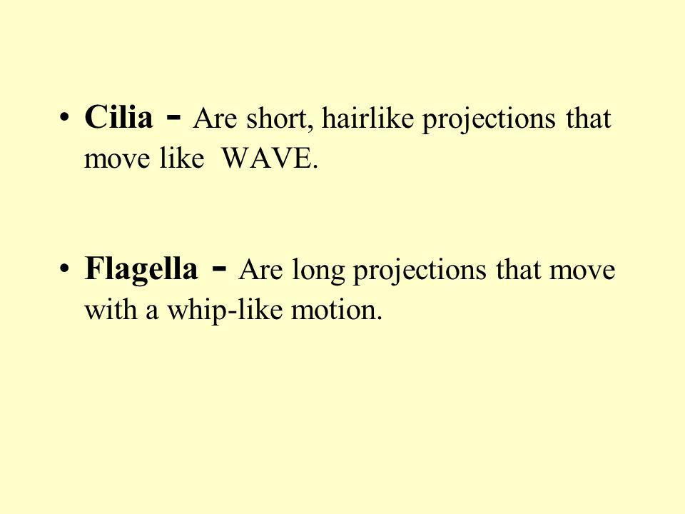 Cilia - Are short, hairlike projections that move like WAVE. Flagella - Are long projections that move with a whip-like motion.