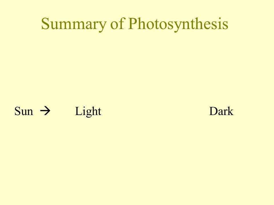 Summary of Photosynthesis Sun Light Dark