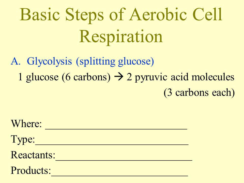 Basic Steps of Aerobic Cell Respiration A.Glycolysis (splitting glucose) 1 glucose (6 carbons) 2 pyruvic acid molecules (3 carbons each) Where: ______