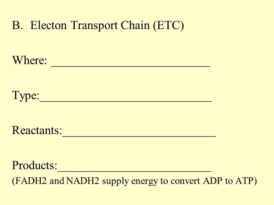 B.Electon Transport Chain (ETC) Where: __________________________ Type:____________________________ Reactants:_________________________ Products:_____