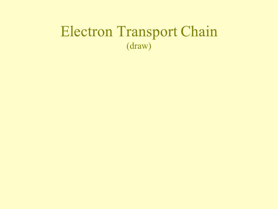 Electron Transport Chain (draw)