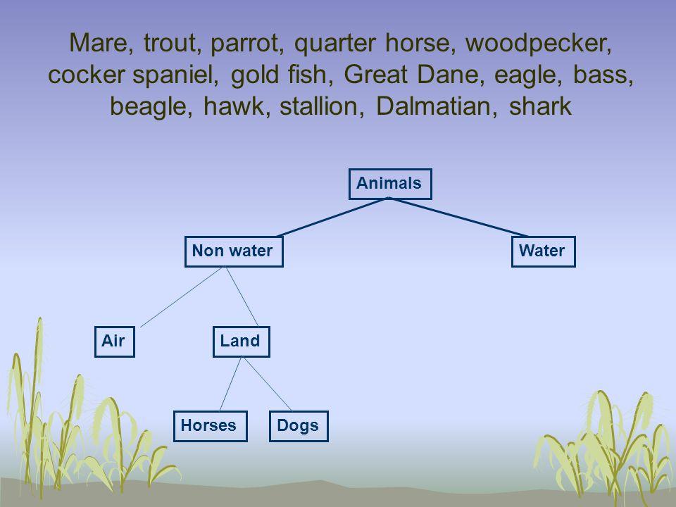 Mare, trout, parrot, quarter horse, woodpecker, cocker spaniel, gold fish, Great Dane, eagle, bass, beagle, hawk, stallion, Dalmatian, shark AirLand N