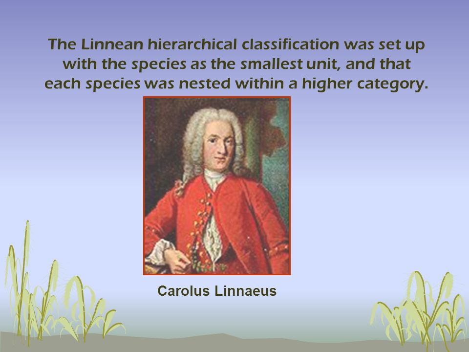The Linnean hierarchical classification was set up with the species as the smallest unit, and that each species was nested within a higher category. C
