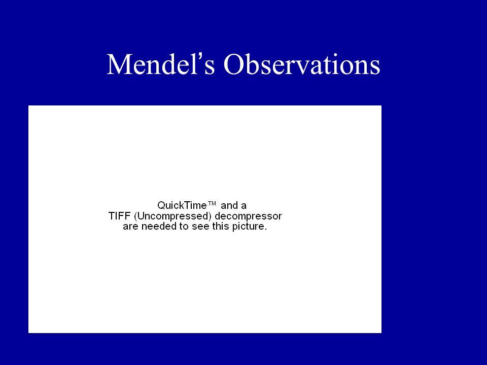 Mendel s Observations