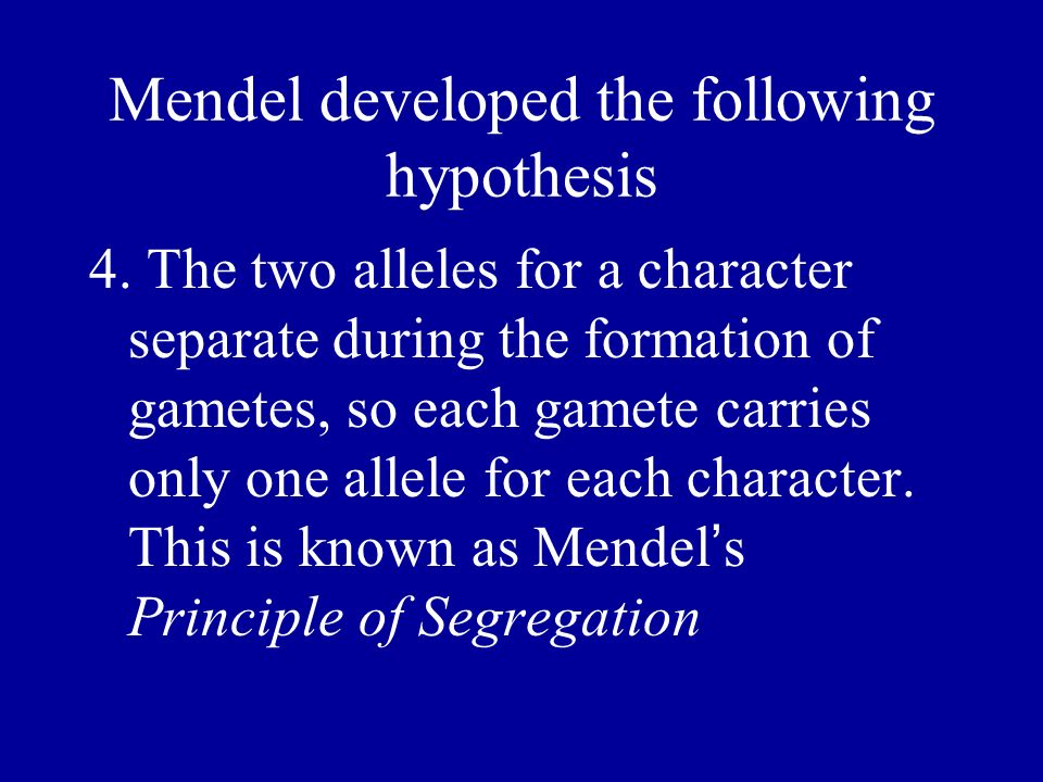 Mendel developed the following hypothesis 4. The two alleles for a character separate during the formation of gametes, so each gamete carries only one