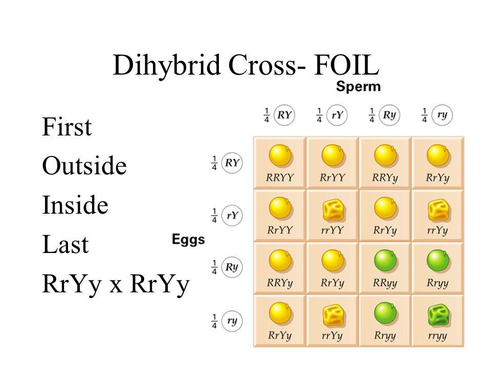 Dihybrid Cross- FOIL First Outside Inside Last RrYy x RrYy