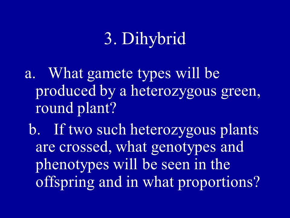 3. Dihybrid a. What gamete types will be produced by a heterozygous green, round plant? b.If two such heterozygous plants are crossed, what genotypes