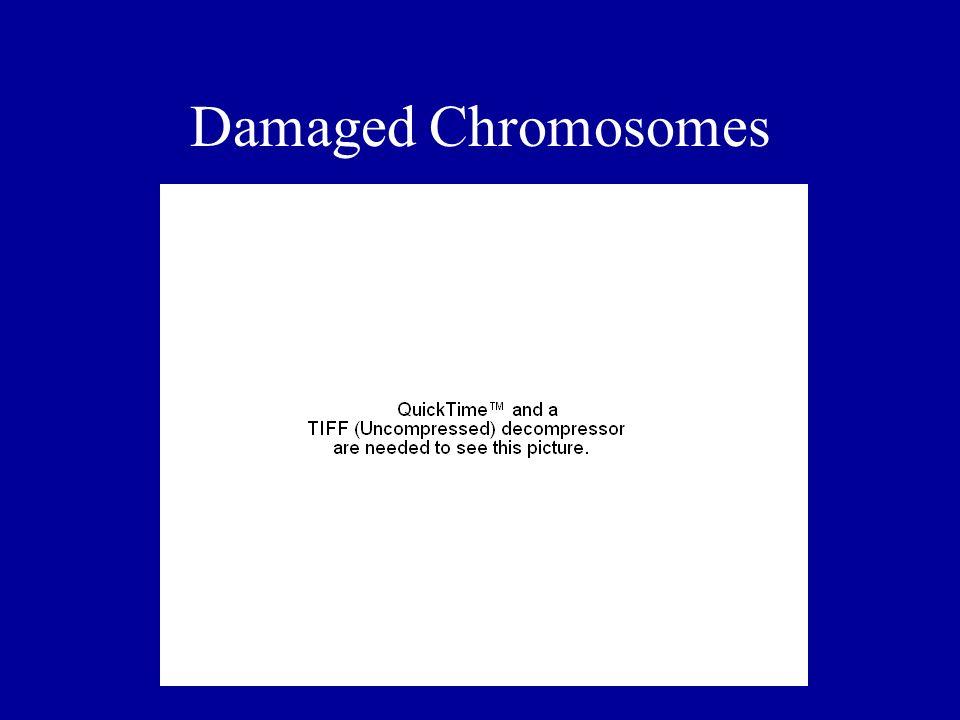 Damaged Chromosomes
