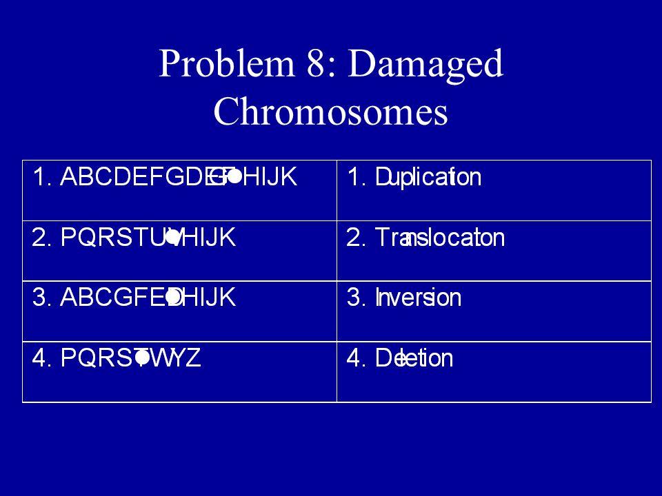Problem 8: Damaged Chromosomes