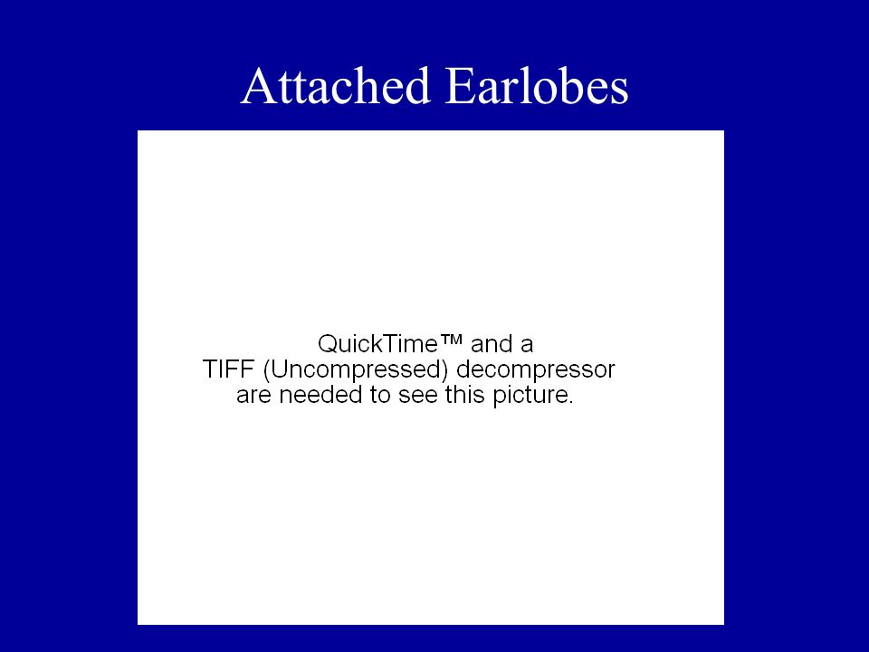 Attached Earlobes