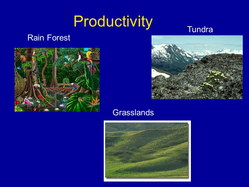 Productivity Rain Forest Tundra Grasslands