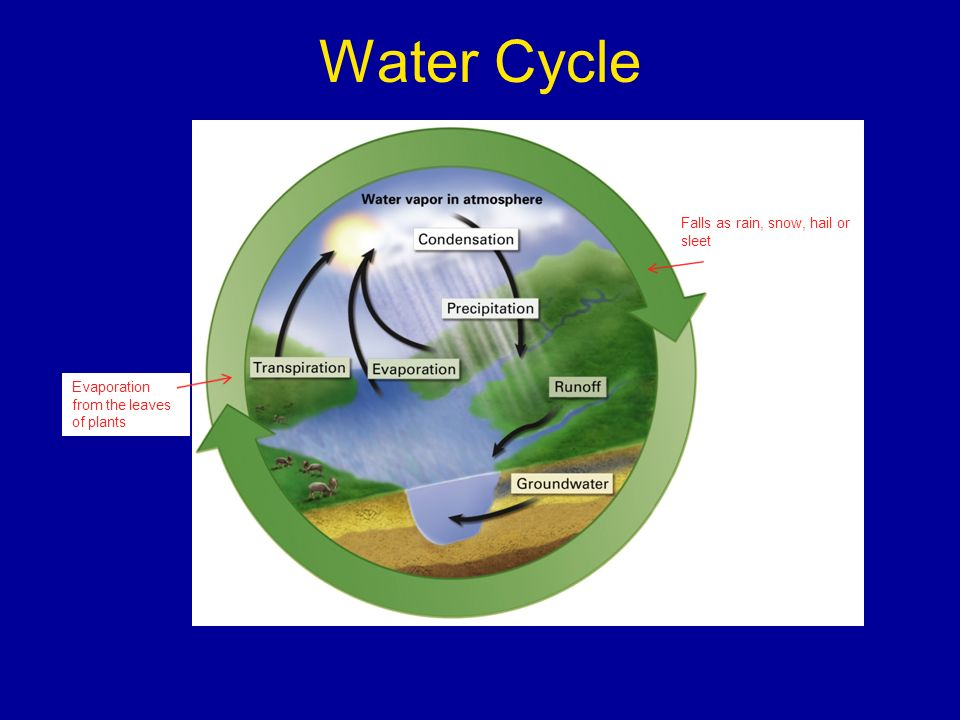 Water Cycle Falls as rain, snow, hail or sleet Evaporation from the leaves of plants