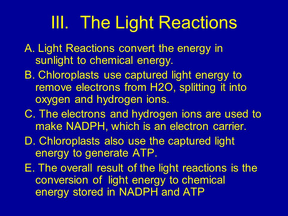 III. The Light Reactions A. Light Reactions convert the energy in sunlight to chemical energy. B. Chloroplasts use captured light energy to remove ele