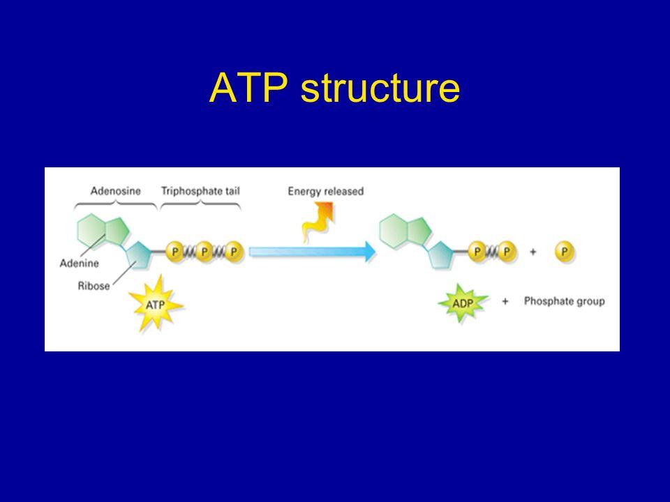 ATP structure