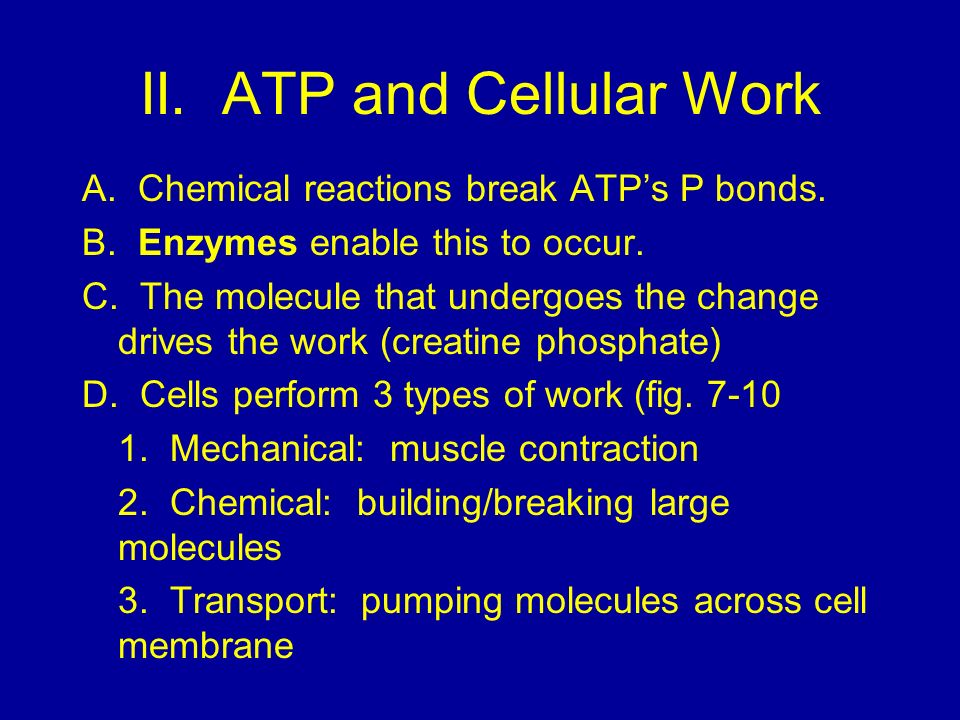 II.ATP and Cellular Work A. Chemical reactions break ATPs P bonds.