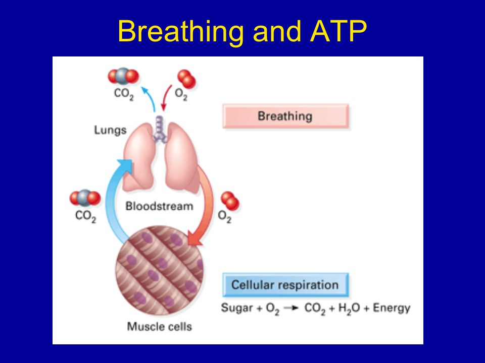 Breathing and ATP