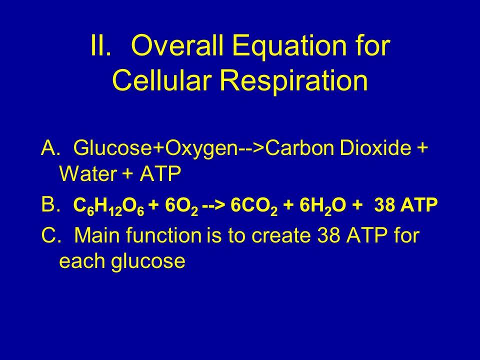 II. Overall Equation for Cellular Respiration A. Glucose+Oxygen-->Carbon Dioxide + Water + ATP B. C 6 H 12 O 6 + 6O 2 --> 6CO 2 + 6H 2 O + 38 ATP C. M