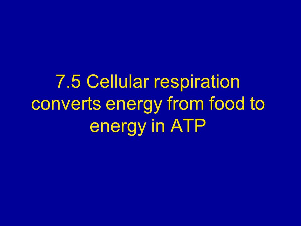 7.5 Cellular respiration converts energy from food to energy in ATP