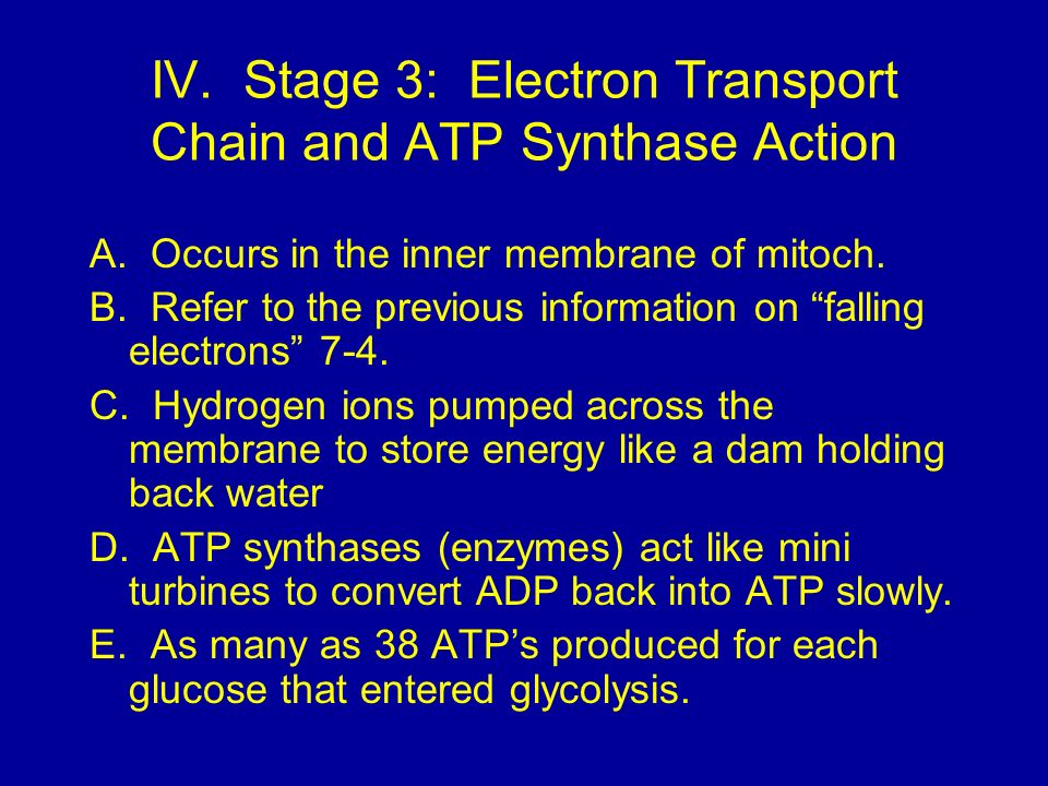 IV.Stage 3: Electron Transport Chain and ATP Synthase Action A.