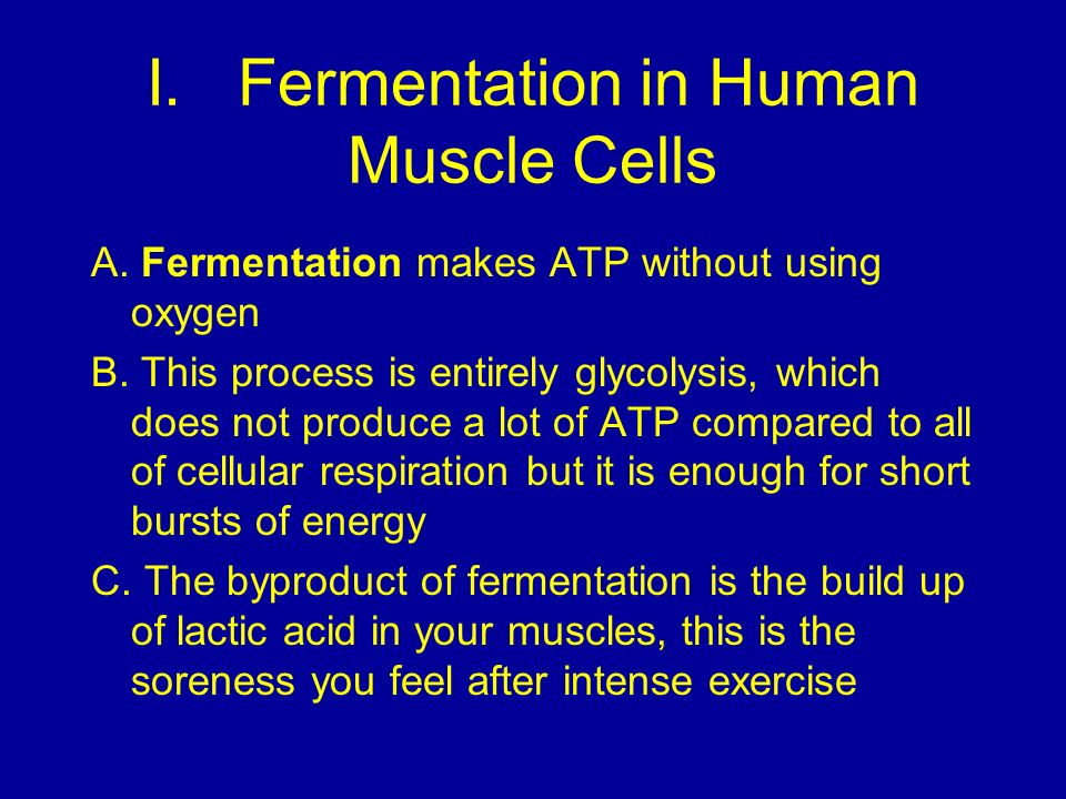 I.Fermentation in Human Muscle Cells A. Fermentation makes ATP without using oxygen B.